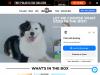 get.boxdog.com coupons